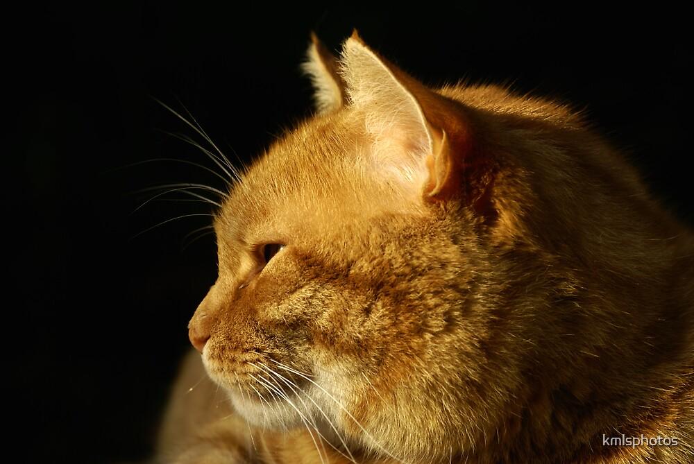 Cat Profile by kmlsphotos