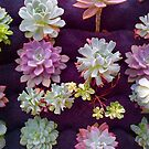 Succulents 2 by Christine  Wilson