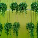 Green Hanging Baskets by Christine  Wilson