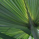 Palm Branch from St. Lucia by rborrows