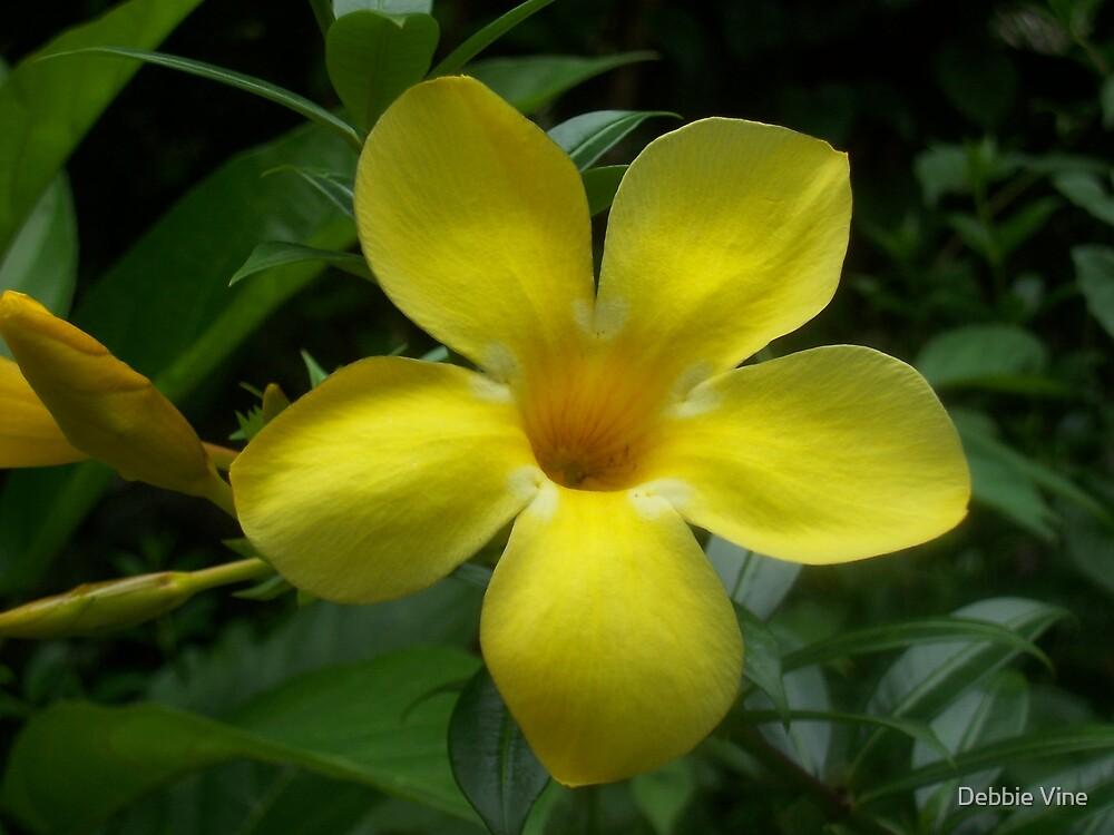 Yellow Flower by Debbie Vine