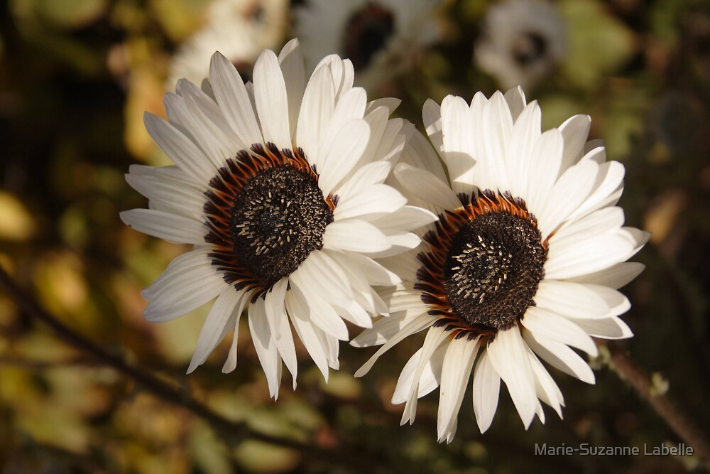 Fowers in Love by Marie-Suzanne Labelle