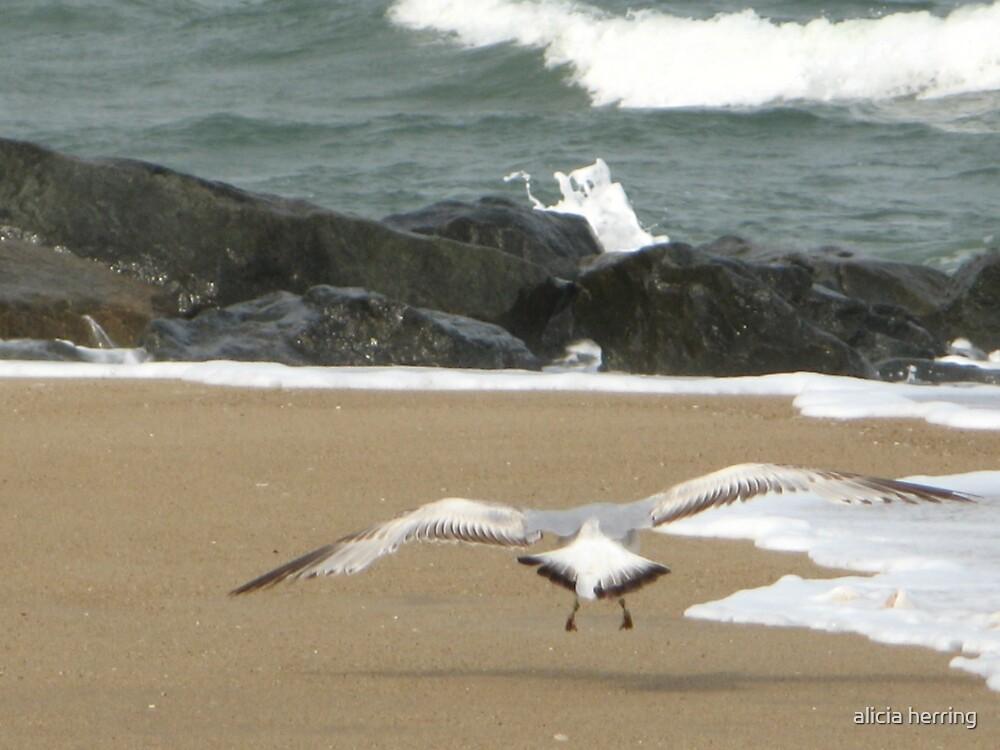 Soaring Gull by alicia herring