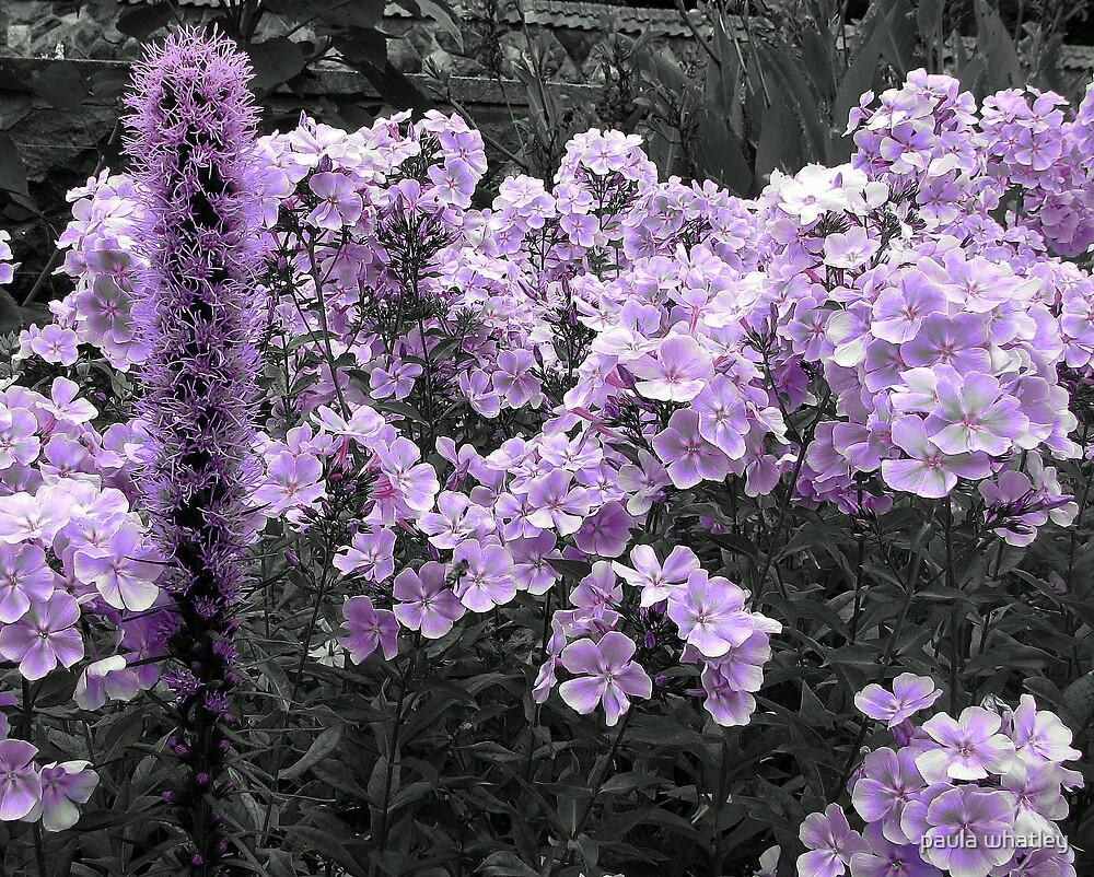 purple flower  by paula whatley
