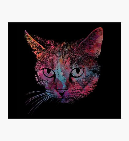 kitty 2 Photographic Print