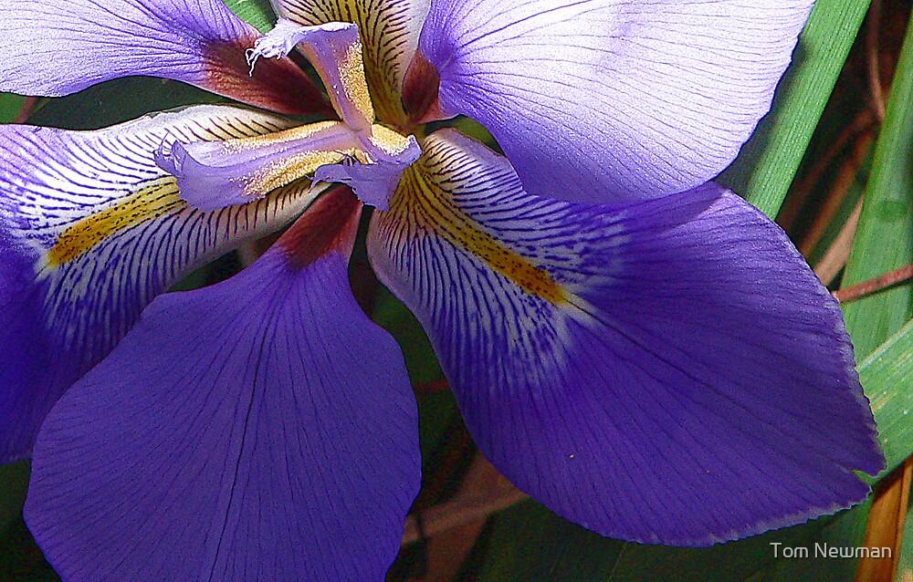Blue Iris by Tom Newman