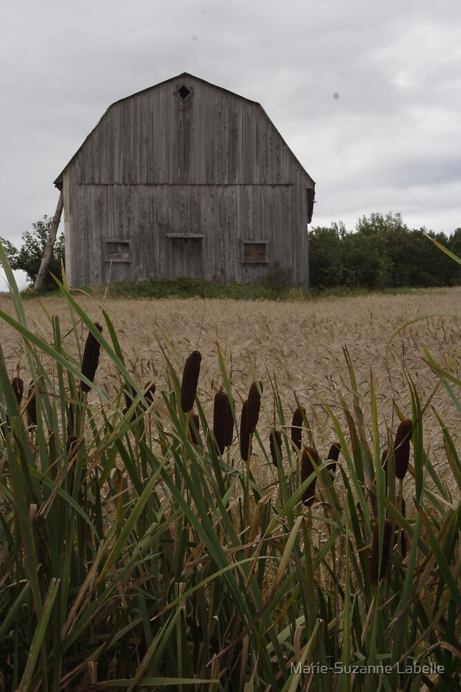 Cattails' Home by Crokuslabel