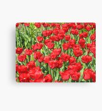 multitude of tulips Canvas Print