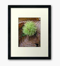 Sweet Chestnut Framed Print