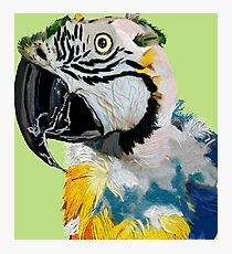 Mr T for Keeper of the Stars Parrot Rescue Photographic Print