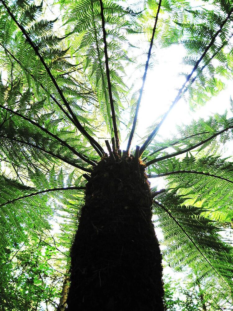 Tree Fern by Sara Wiggins