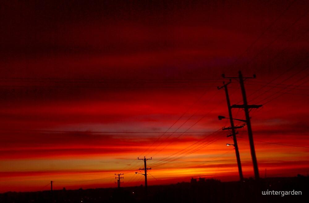 Sunset by wintergarden