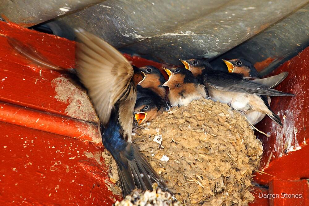 Swallows Feeding at Rutherglen by Darren Stones