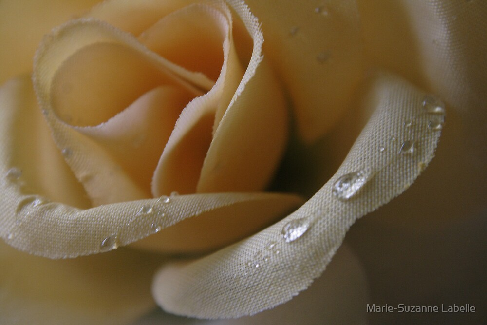 Cloth Rose by Marie-Suzanne Labelle