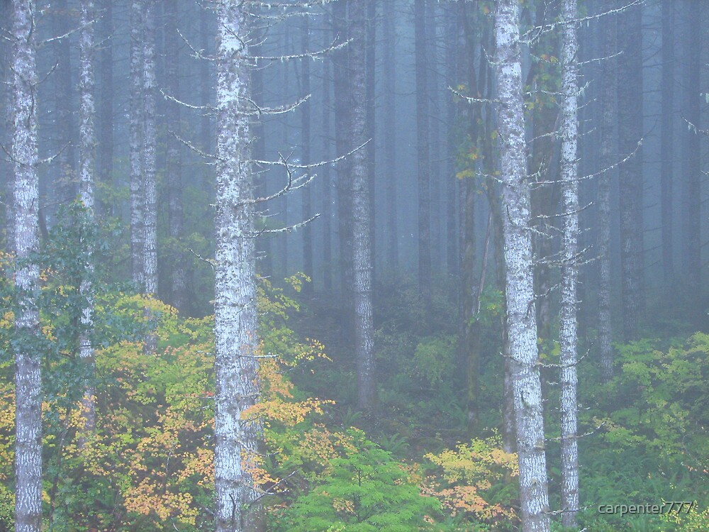 Blue forest by carpenter777