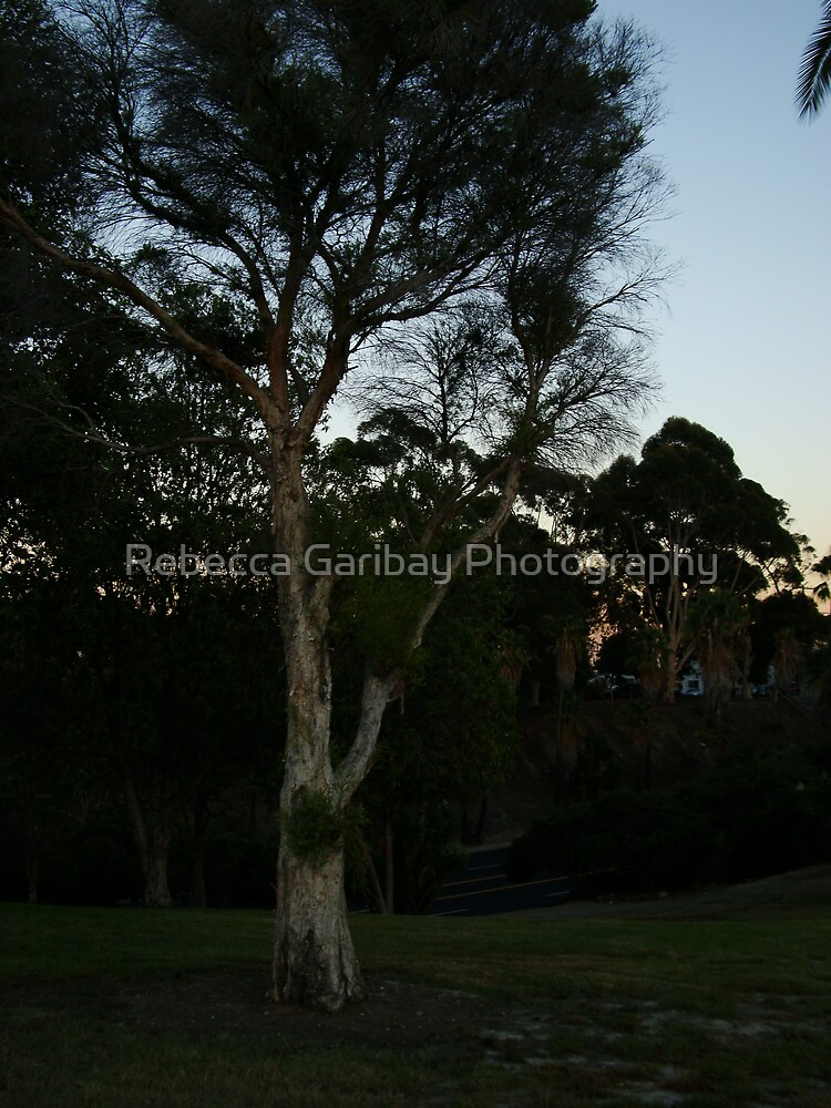 Summerland Park by Rebecca Garibay Photography