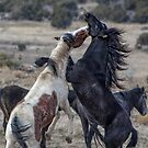 Wild Horses 2 by CarolM
