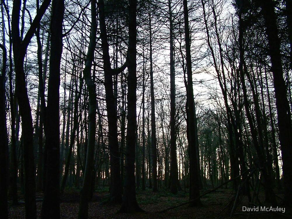 Forest by David McAuley