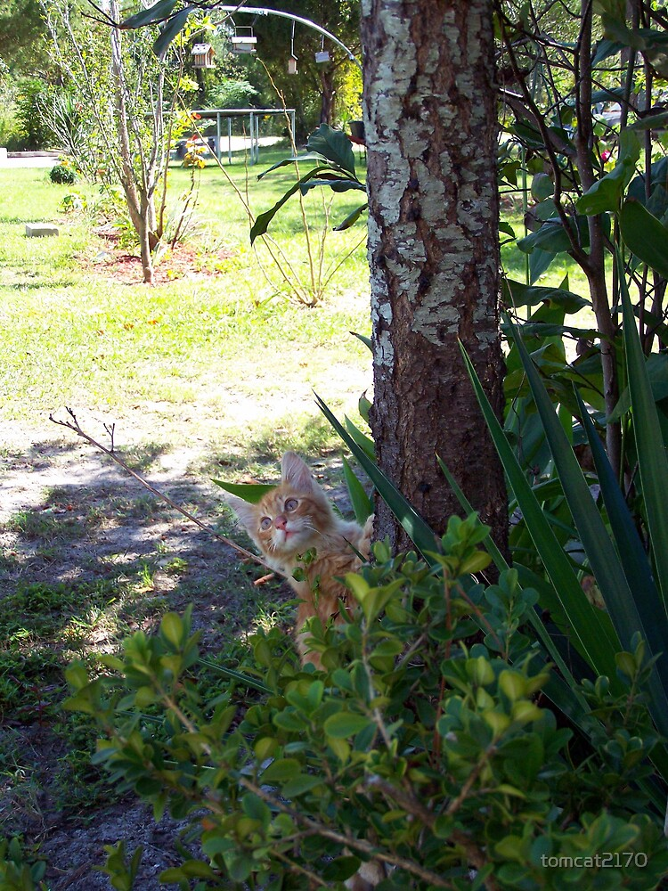 hurry...take the photo while i pretend to climb the tree!! by tomcat2170