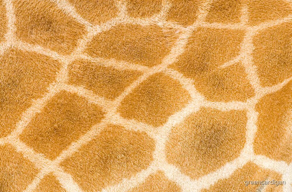 Giraffe by greencardigan