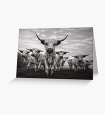 Highland Cattle Mixed Breed Mono Greeting Card