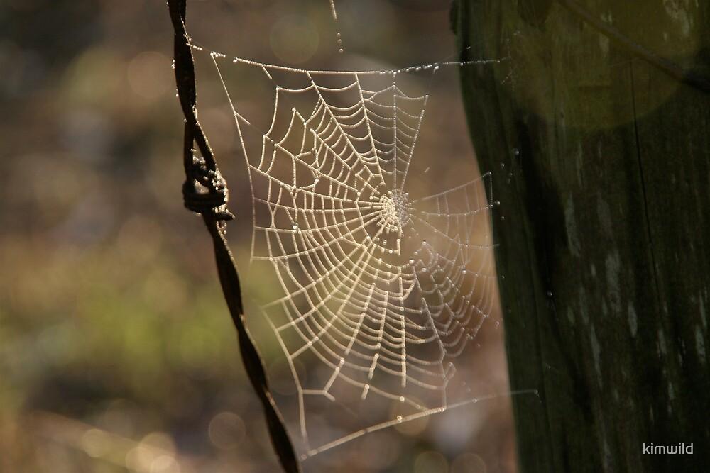 Spider web by kimwild