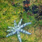 Blue Starfish by Hans Bax
