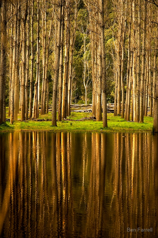 Reflection by Ben Farrell
