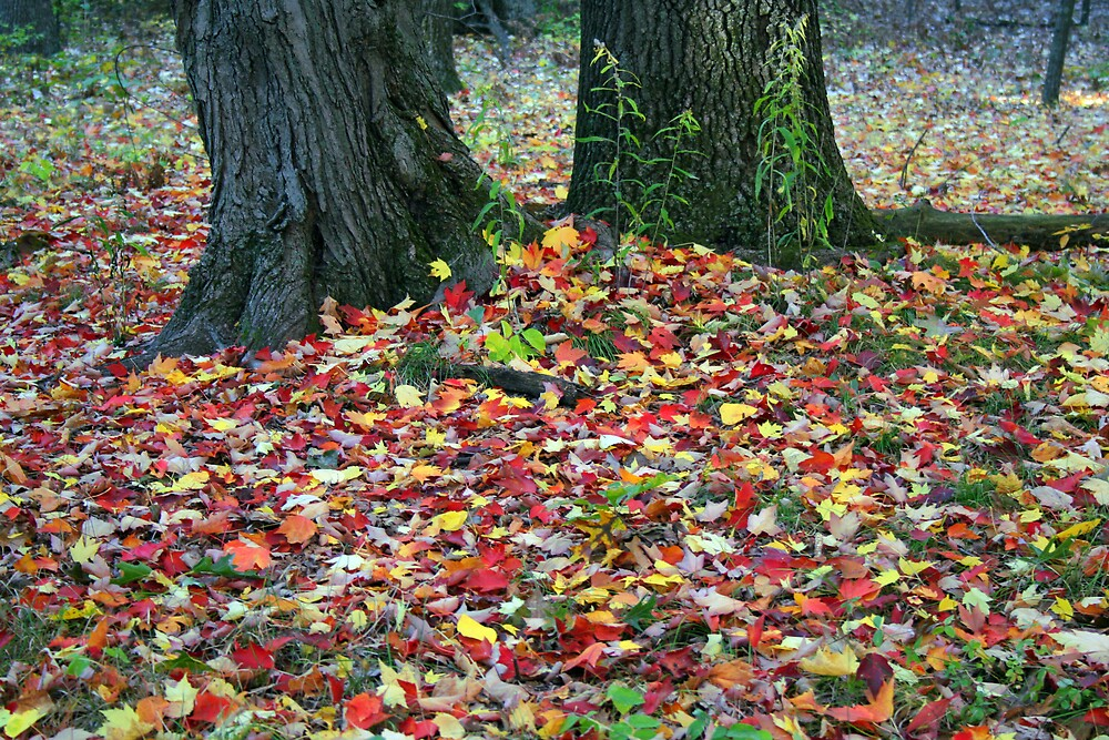 Colorful Leaves by Andrew & Wendy Hahn