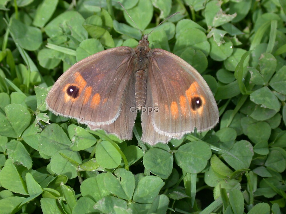 Meadow Brown by cappa