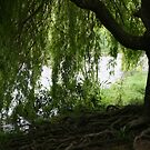 Along the riverbank by JoTaylor
