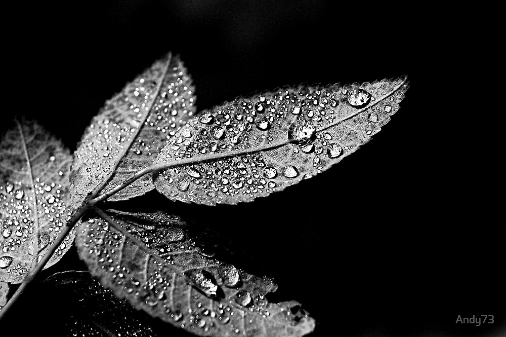 Remnant of rain by Andy73