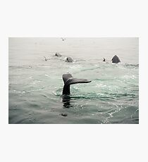 Whale Tail Photographic Print