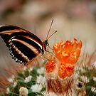 butterfly 3 by Els Steutel