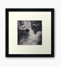 Casper the friendly dog Framed Print