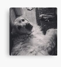 Casper the friendly dog Canvas Print