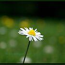 Daisy by weallareone