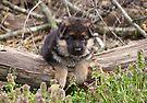 Puppy on a Log by Sandy Keeton