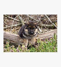 Puppy on a Log Photographic Print