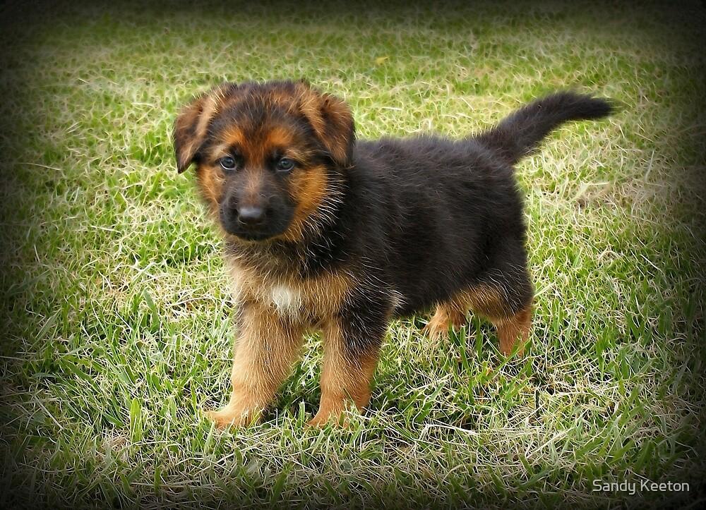 Black & Tan Puppy by Sandy Keeton