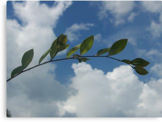 same ol' branch, different day by Gemineye