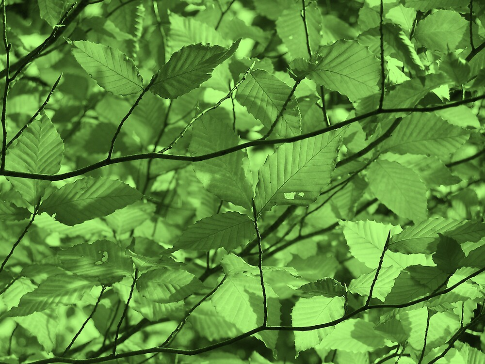Green Leaves by Gene Cyr