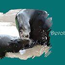 Devotion (Sea Lions) by CreativeEm