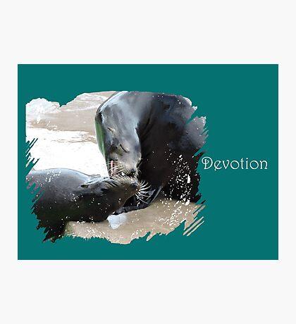 Devotion (Sea Lions) Photographic Print