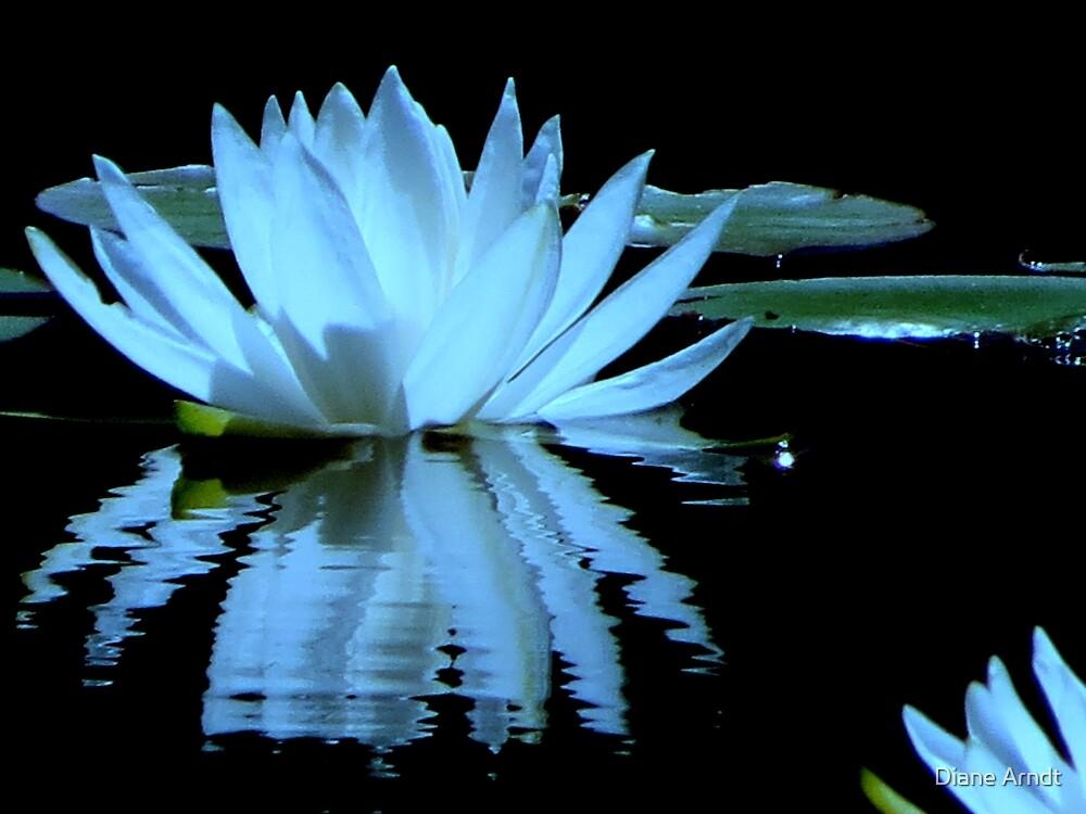 Ripples...Black Ponds..Waldport, Oregon by Diane Arndt