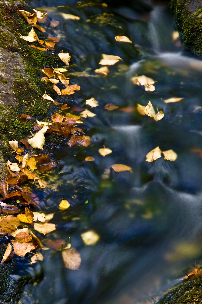 Autumn Cascade by Patrick Beggan