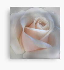 Single Pink Rose Metal Print