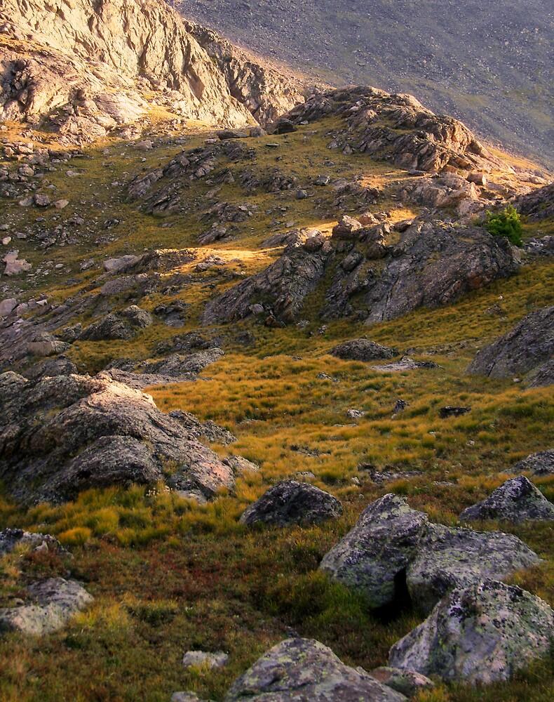 the Tundra by Patrick Beggan