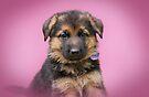 Valentine Puppy by Sandy Keeton