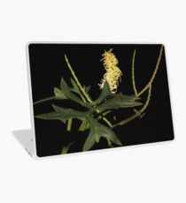 Grevillea flexuosa Laptop Skin